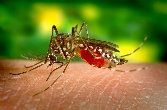 zanzare malaria